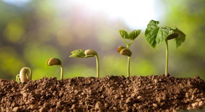 Immagine tratta da coltivazionebiologica.it