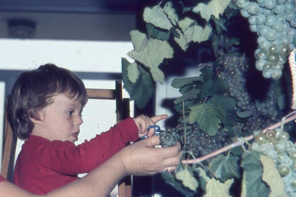 Nido Peter Pan ... la vendemmia al nido! 1980