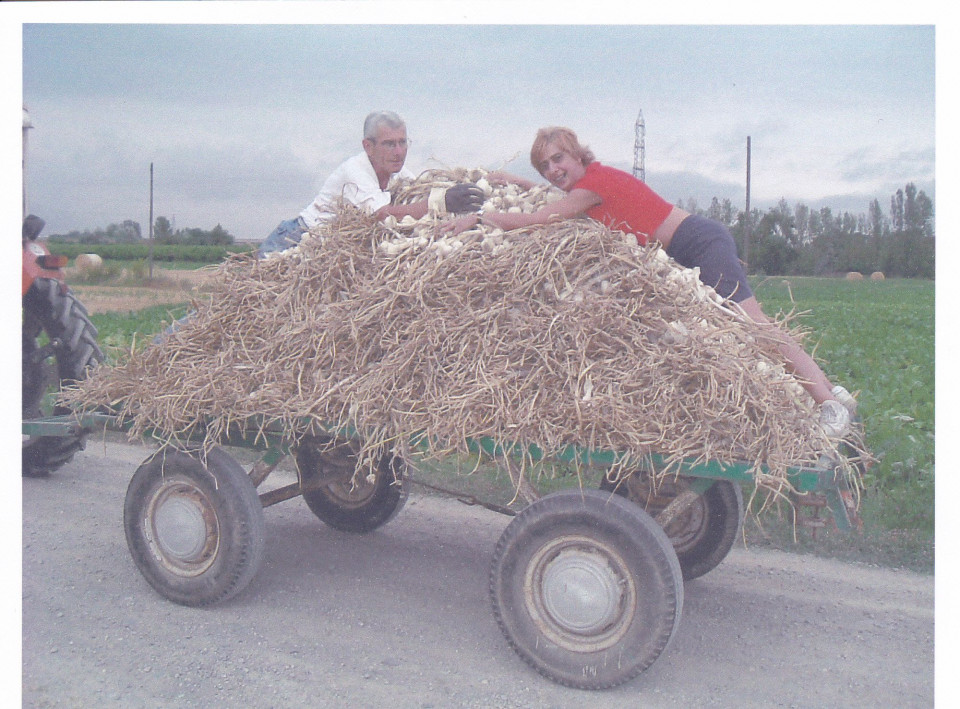La raccolta degli agli, giugno 2004