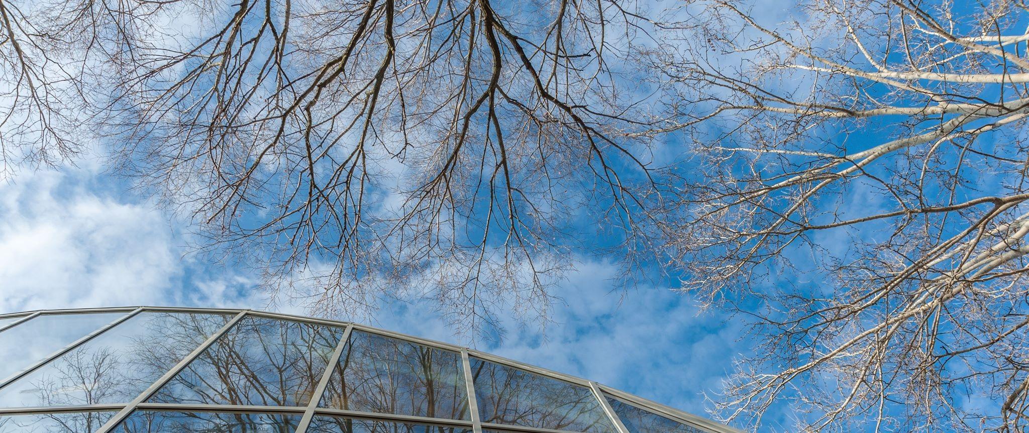 albero e facciata casa della cultura