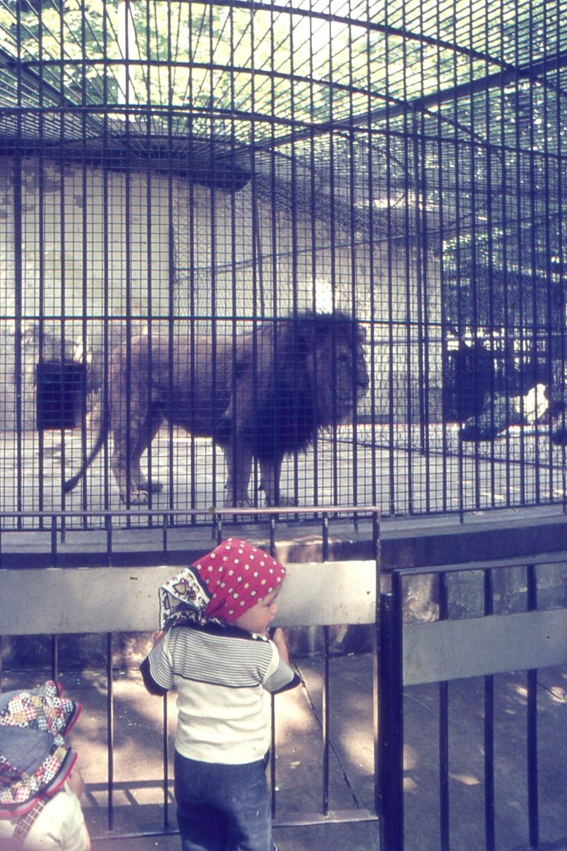 Gita del Nido Peter Pan: il leone ai Giardini Margherita, 1980
